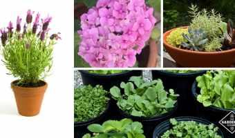 container gardening basics