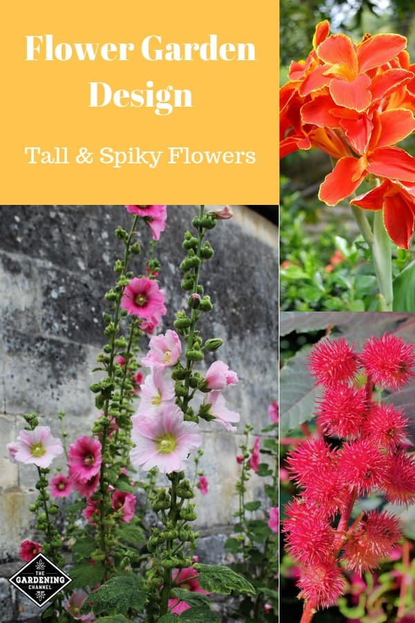 hollyhock castor bean plant canna flower with text overlay flower garden design tall and spiky flowers