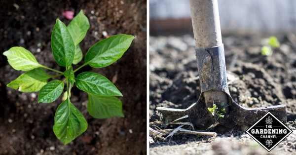 understanding soil pH