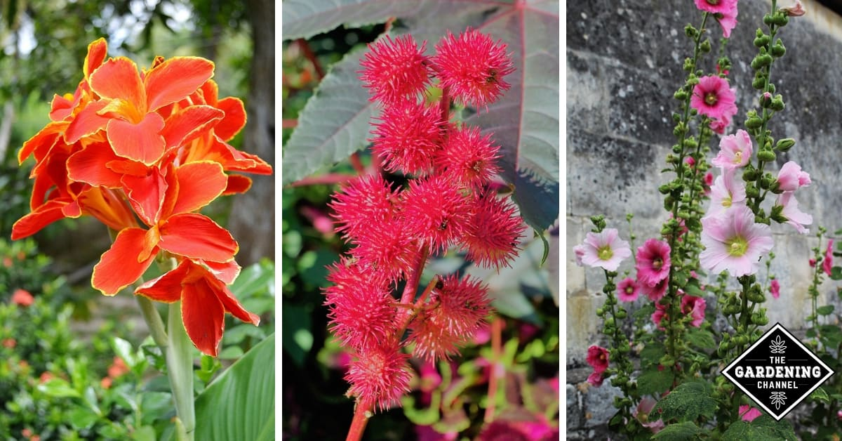 Roses In Garden: Top Vertical Or Spiky Flowers To Grow In Your Garden