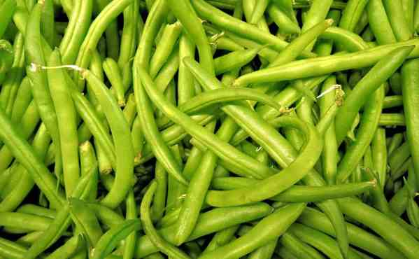 beans for companion planting