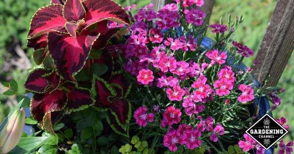 flower container gardens