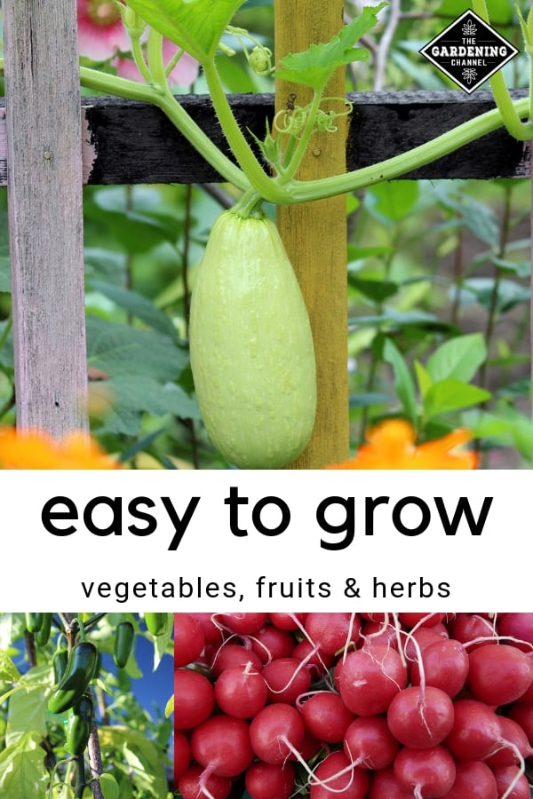 zucchini jalapeno peppers radishes with text overlay easy to grow vegetables fruits herbs