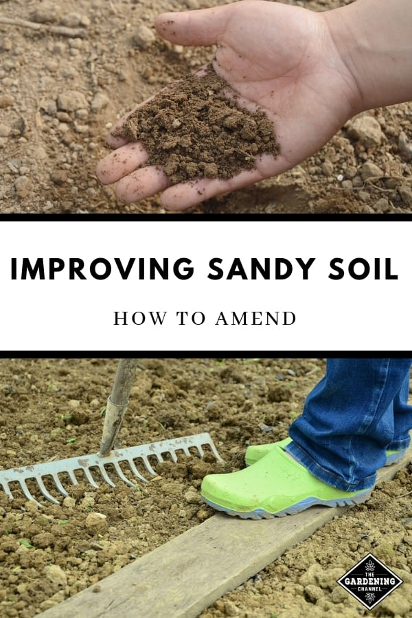 sandy soil gardening with text overlay improving sandy soil how to amend