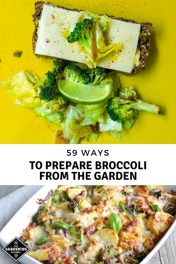broccoli recipes and dishes with text overlay fifty nine ways to prepare broccoli from the garden