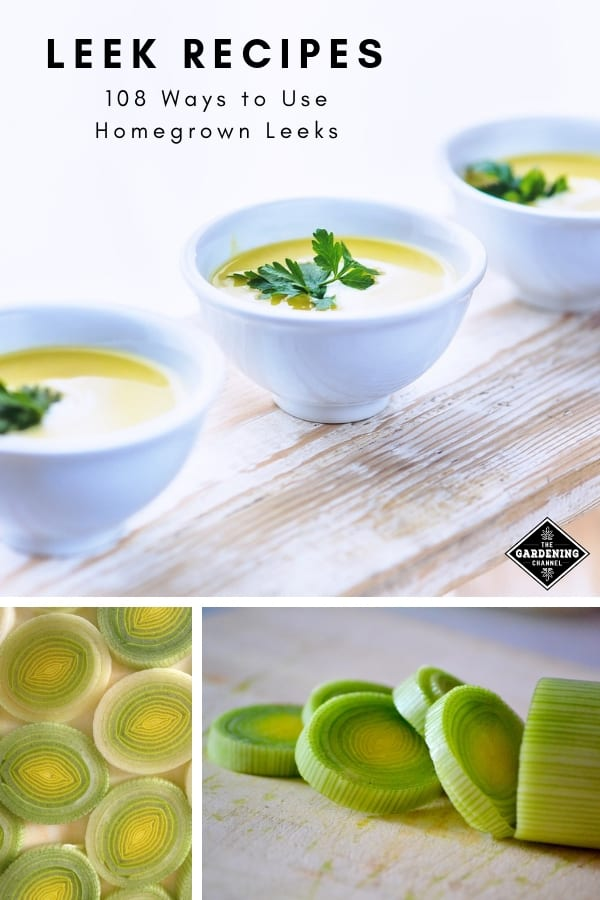 leek soup cutting leeks with text overlay leek recipes one hundred eight ways to use homegrown leeks