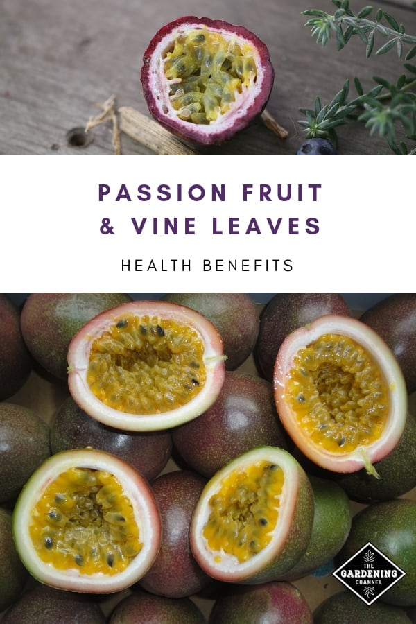 passion fruit in half with text overlay passion fruit and vine leaves health benefits