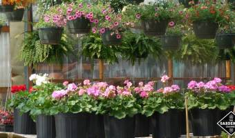 how to pick out plants at nursery