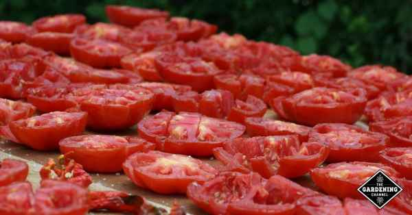 cooking with fresh tomatoes