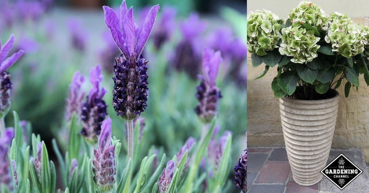 Plan A Low Maintenance Garden In 9 Easy Steps Gardening Channel