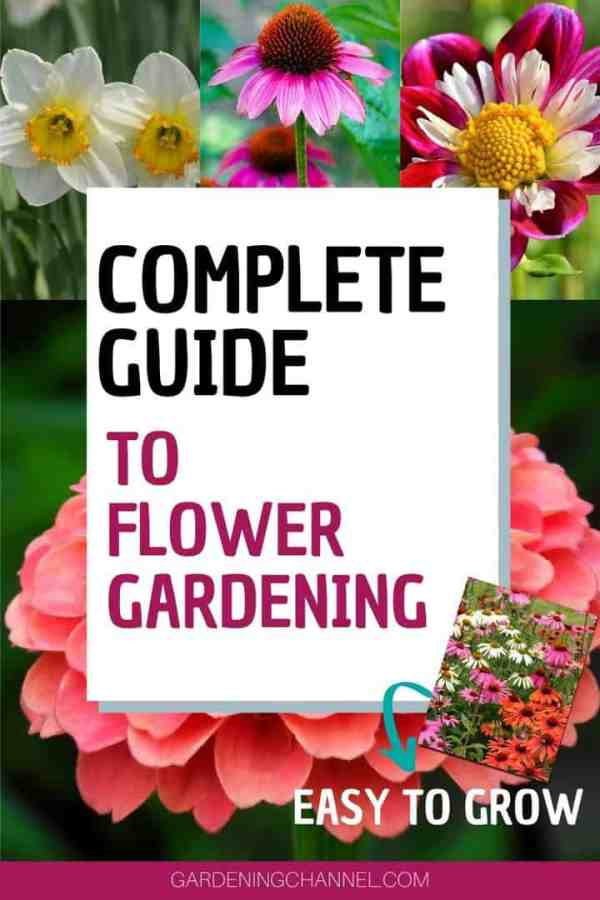 daffodils coneflower zinnias with text overlay complete guide to flower gardening easy to grow