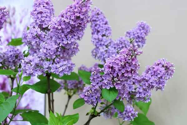 popular gardening flowers