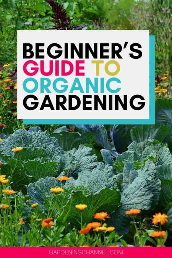 organic garden with text overlay beginner,s guide to organic gardening