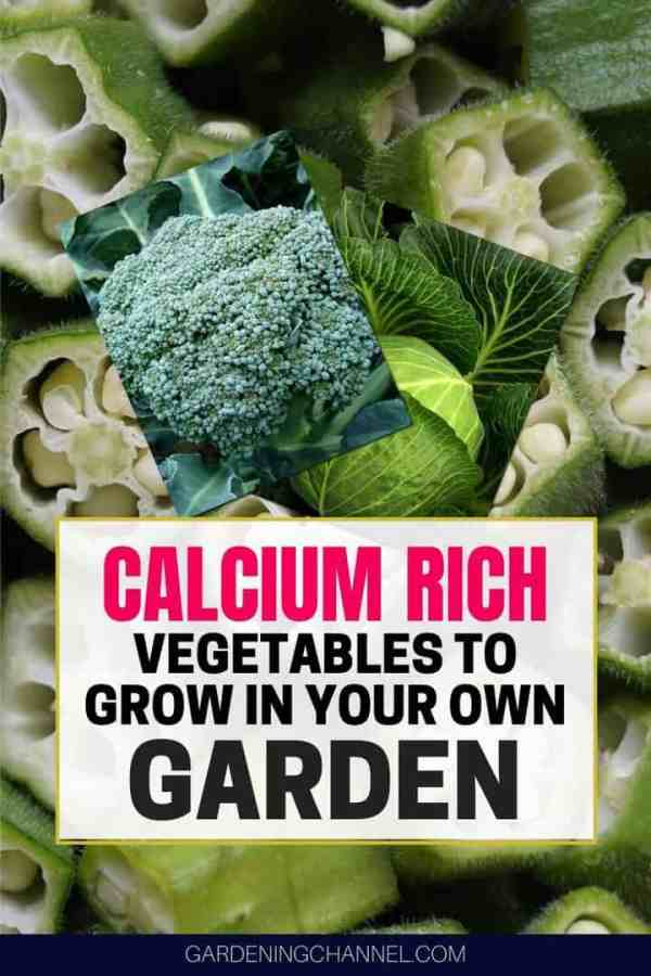 okra cabbage broccoli with text overlay calcium rich vegetables to grow in your own garden