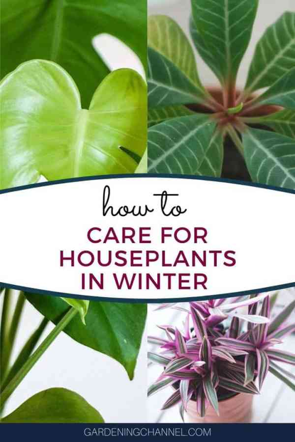 three houseplants with text overlay how to care for houseplants in winter
