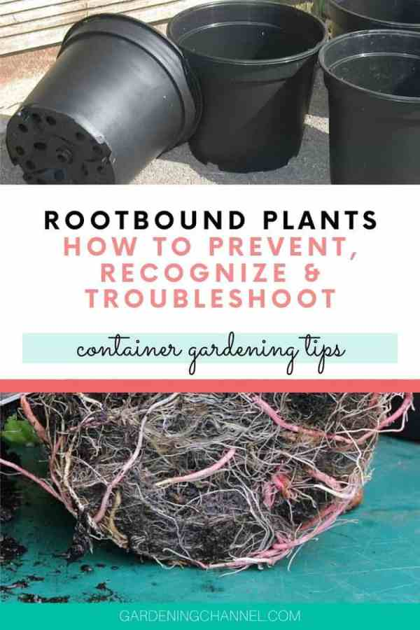 black plastic garden pots plant roots with text overlay rootbound plants how to prevent recognize troubleshoot container gardening tips