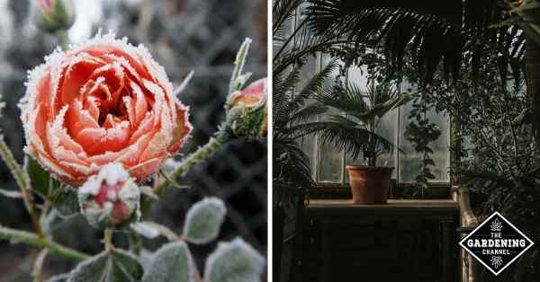 storing plants in winter