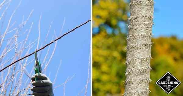 winter gardening tips pruning winterizing
