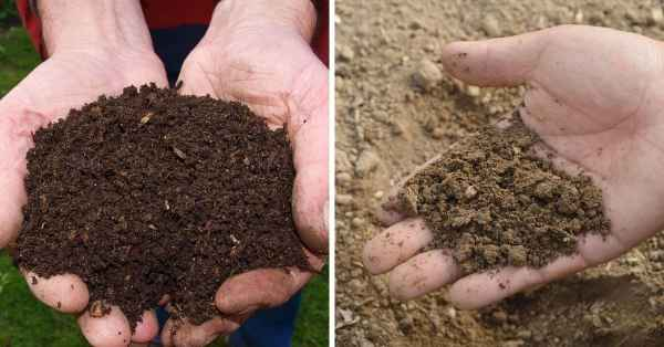 compost versus soil