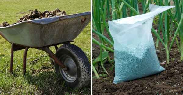 when to use manure or fertilizer