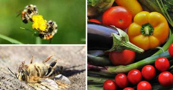 organic and nonorganic gardening methods