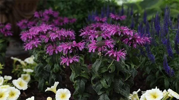 Garden pollinator