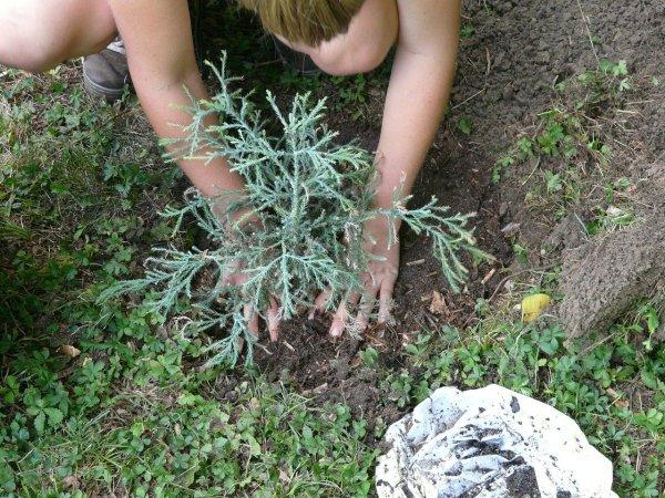 kneeling and gardening