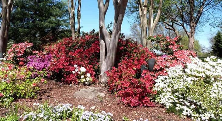 colorful plants under the trees