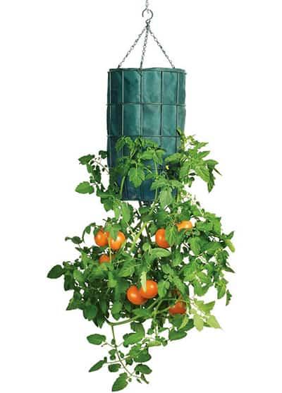 Upside-Down Tomato Planter