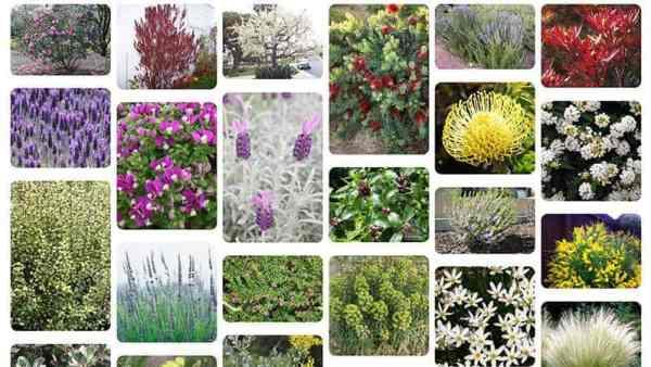 Backyard plants for landscape