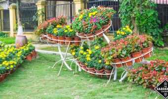 Designing Captivating Backyard Ideas