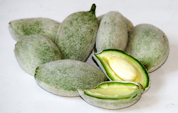 Green almond fruit