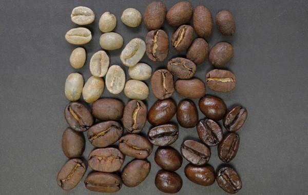 Coffea arabica seeds