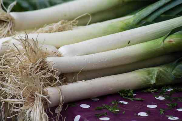 freshly harvested leeks are delicious