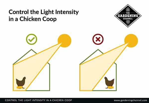 light intensity chicken coop