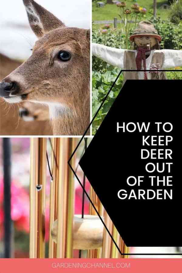 deer scarecrow wind chime with text overlay how to keep deer out of the garden