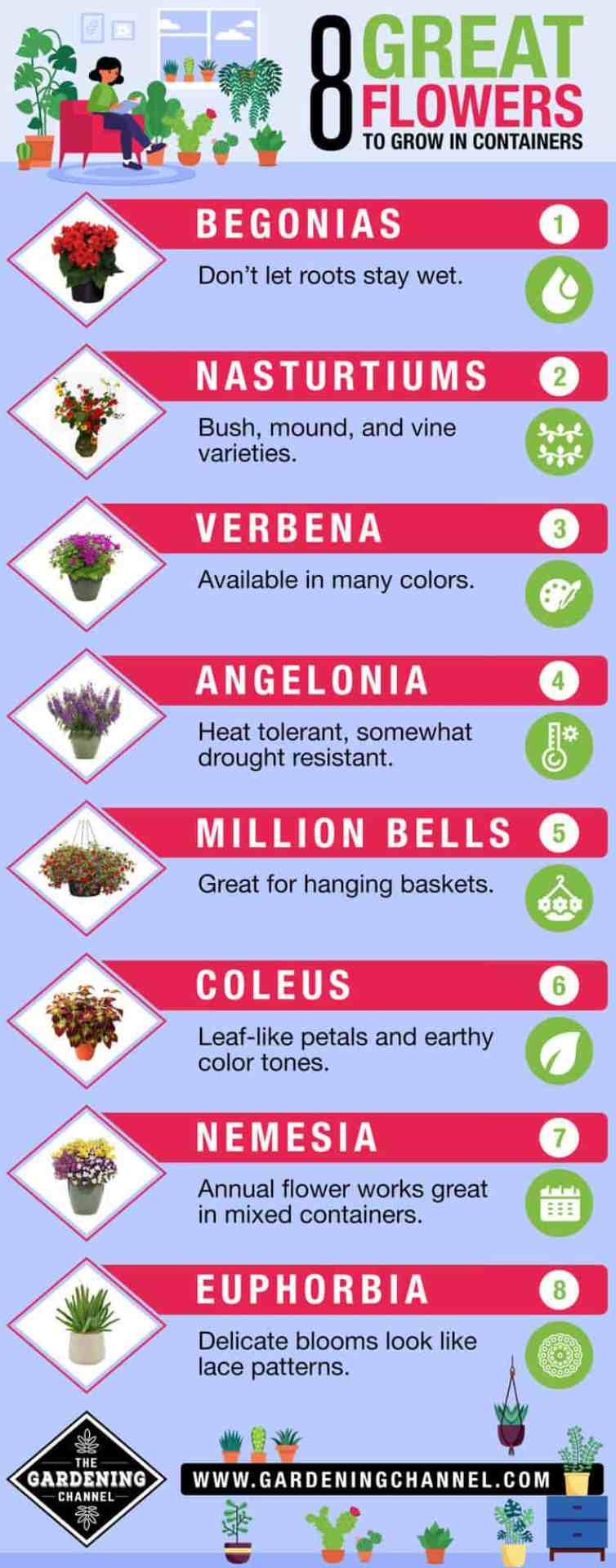 8 Top Flowers to Grow In Containers