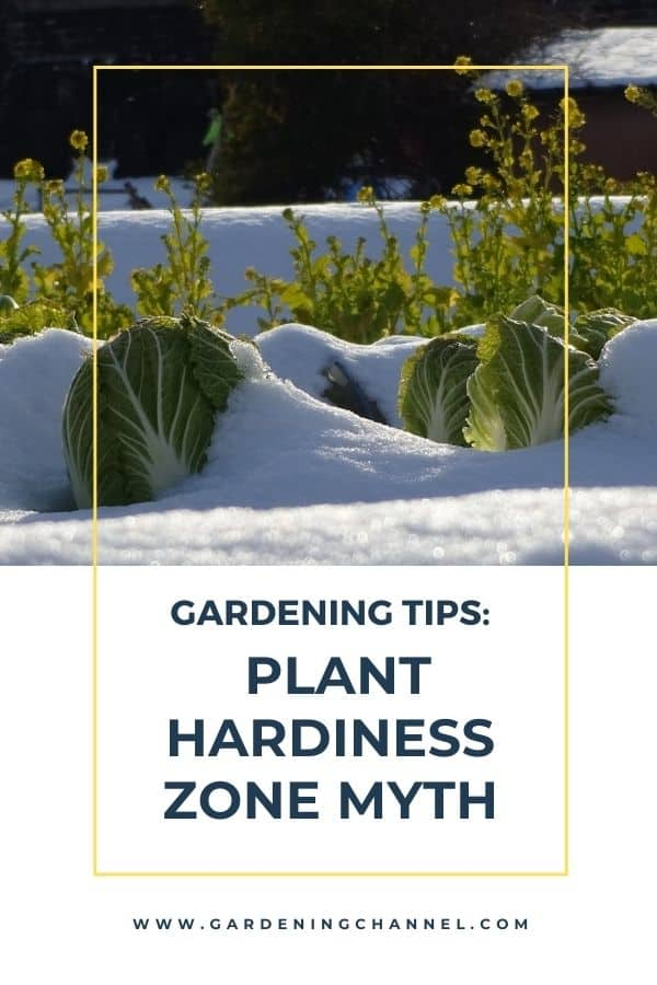 cabbage in snow with text overlay gardening tips plant hardiness zone myth