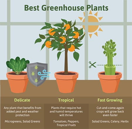 best greenhouse plants illustration
