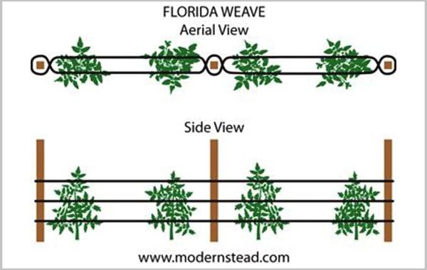 Florida weave