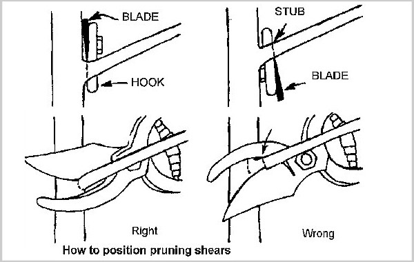 position pruning shears