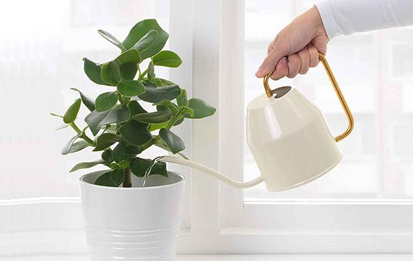 Best Watering Cans