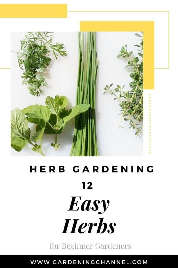 kitchen herbs with text overlay herb gardening twelve easy herbs for beginner gardeners