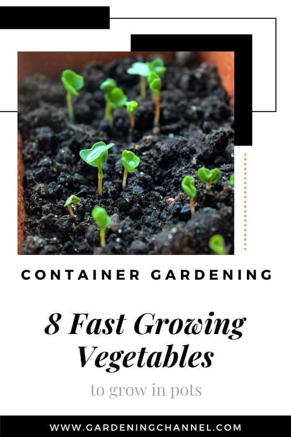 arugula sprouts with text overlay container gardening eight fast growing vegetables to grow in pots