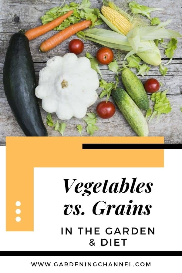 vegetable garden harvest with text overlay vegetables versus grains with text overlay in the garden and diet