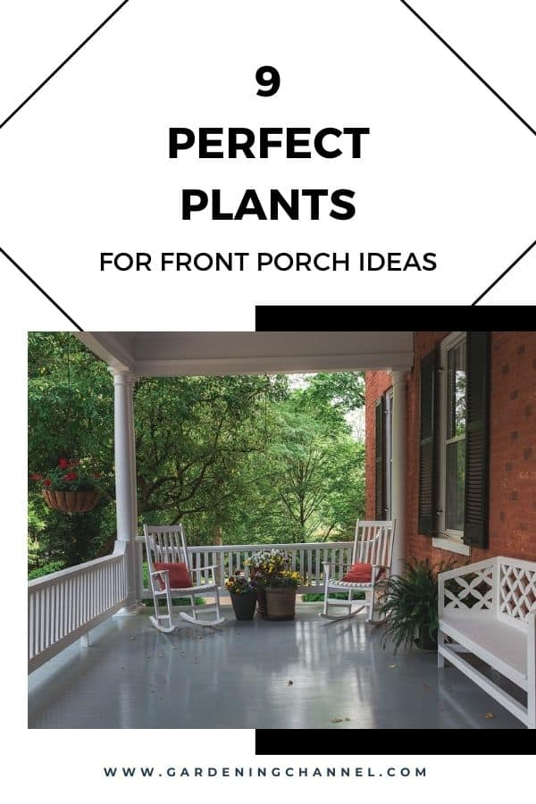 front porch plants with text overlay nine perfect plants for front porch ideas