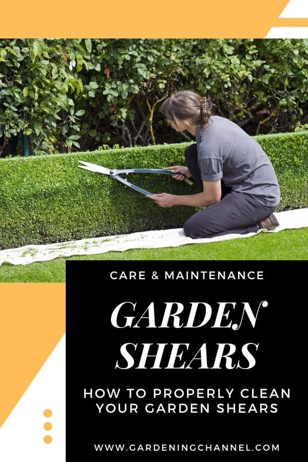gardener trimming hedge with garden shear with text overlay care and maintenance garden shears how to properly clean your garden shears