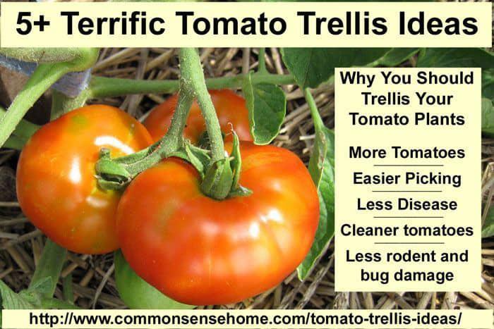 Terrific tomato trellis