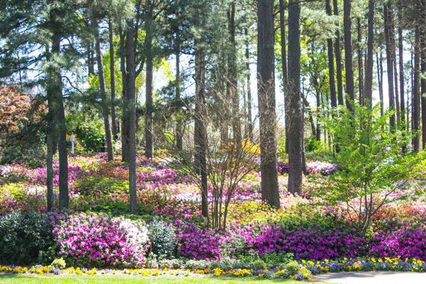 woodland yard