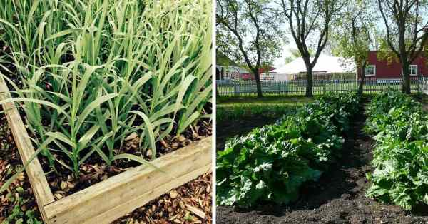 raised bed garden vs in the ground garden